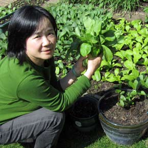 Grow your own Taiwanese vegetables in a month! 一個月內自己栽種台灣蔬菜